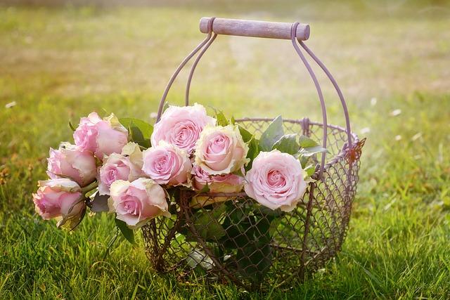růže.jpg