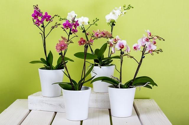 orchideje.jpg